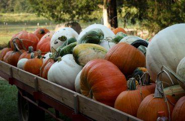 Fall Season Begins on October 2, 2021!